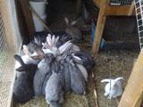 Турбаза Падун, кролики