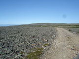 Скалистая тундра