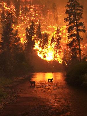 Подведена статистика лесных пожаров за 2014 год